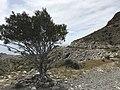 Loma Pelada, Parque Natural Cabo de Gata - Nijar (26739960277).jpg