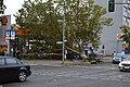 Lone tree after windstorm.jpg