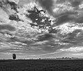 Lonely Tree - Via Dino Lugli, Reggio Emilia, Italy - May 30, 2016 - panoramio.jpg