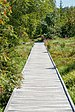 Lothar Path - Black Forest National Park 12.jpg