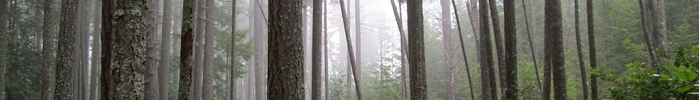 Lumpytrout Wikivoyage Page Banner Washington State Forest.JPG