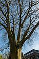 Münster, Park Sentmaring, Naturdenkmal -- 2015 -- 5655.jpg