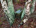 MOs810 WG 55 2016 Pyzdry Forest III (Evangelical cemetery in Zamety) (5).jpg