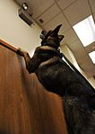 MWD searches for trace amount 140219-F-QQ371-053.jpg