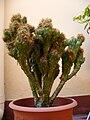 Maceta cactus.jpg