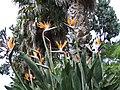 Madeira - Monte - Jardim Tropico (2093409116).jpg