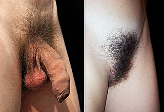 Male and Female Pubic Hair.jpg