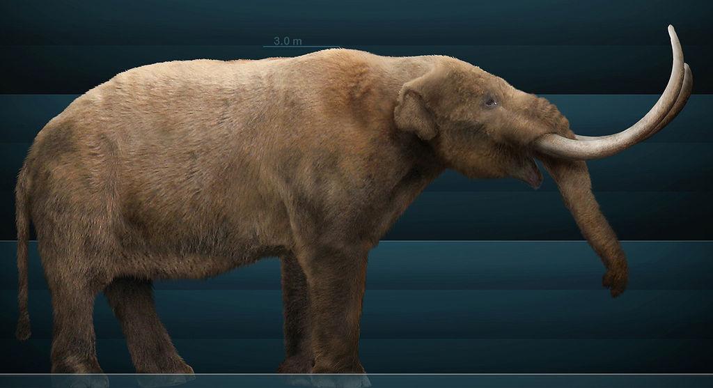 Mammut americanum Sergiodlarosa