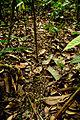 Manu National Park-36.jpg