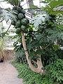 Medicinal Plants - US Botanic Gardens 42.jpg