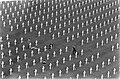 Memorial Day op Margratens erebegraafplaats de begraafplaats, Bestanddeelnr 922-4730.jpg