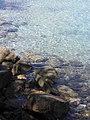 Mer et cailloux à L'Île-Rousse.jpg