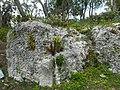 Miami Rock Ridge - Rock Outcrop Closeup 01.jpg