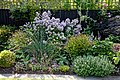 Mixed border and trellis.jpg