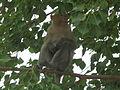 Monkey - 1.JPG