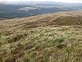 Moorland in the Berwyns near Moel Sych - geograph.org.uk - 972012.jpg