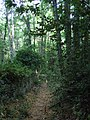 Mount Athos- path alongside ivy covered remains of a wall.jpg