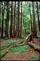 Muir Woods National Monument, California (4e654a24-4b88-4b7c-996c-d02bea3e745f).jpg