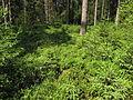 Multerberské rašeliniště (004).jpg