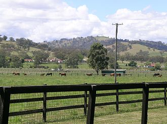 Stud farm - A Thoroughbred horse stud farm, Murrurundi, New South Wales