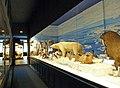 Musée zoologique de Strasbourg-Mondes polaires (1).jpg