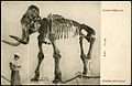 Museum of Zoology SPb 000000505 1 m.jpg