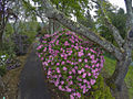 My Public Lands Roadtrip- O.H. Hinsdale Rhododendron Garden in Oregon (19090960172).jpg