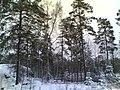 Myllymestarintie - panoramio.jpg
