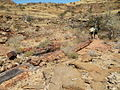 NA-petrified-forest-2.jpg