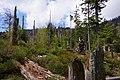 Natürliche Entwicklung des Waldes am Rachelsee.jpg