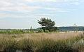 Nationaal Park Drents-Friese Wold. Locatie Fochteloërveen 011.JPG