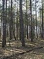 Nationaal Park Kennemerland (27499215828).jpg