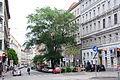 Naturdenkmal 794 2014-05-13 (22) Wien07 Burggasse26 Feldulme.JPG