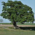 Naturdenkmal GES 2 Gescher-Estern.jpg