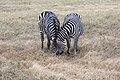 Nature of Ngorongoro Conservation Area (28).jpg