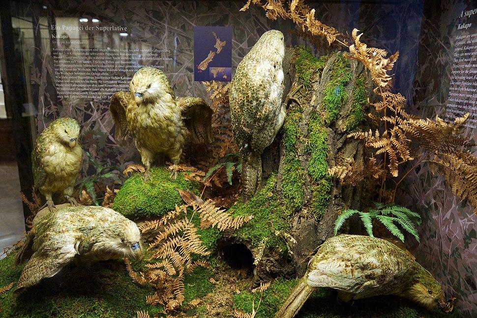 Naturhistorisches Museum, Kakapo