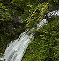 Naturpark Ötscher-Tormäuer - Trefflingfall V.jpg