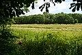 Naturschutzgebiet Haseder Busch - Im Haseder Busch (11).jpg