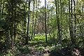 Naturschutzgebiet Trunnenmoor IMG 2648.jpg