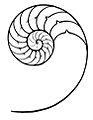 Nautilus Pompilius Section cut.jpg