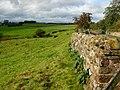 Newbiggin Moor - geograph.org.uk - 258790.jpg