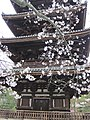 Ninna-ji National Treasure World heritage Kyoto 国宝・世界遺産 仁和寺 京都39.JPG