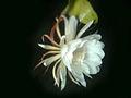 Nishagandhi Pathaayan2.jpg