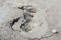 Norris Geyser Basin 9.jpg
