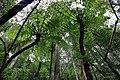 Northern limit of Hego habitat in Hachijojima Island H.jpg
