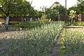 Ogród Teściowej - panoramio.jpg