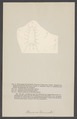 Olencira - Print - Iconographia Zoologica - Special Collections University of Amsterdam - UBAINV0274 006 03 0059.tif