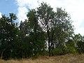 Olmos - panoramio.jpg