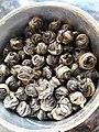 Oolong Tea wrapped tea balls.jpg