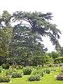 Orléans - parc floral (42).jpg